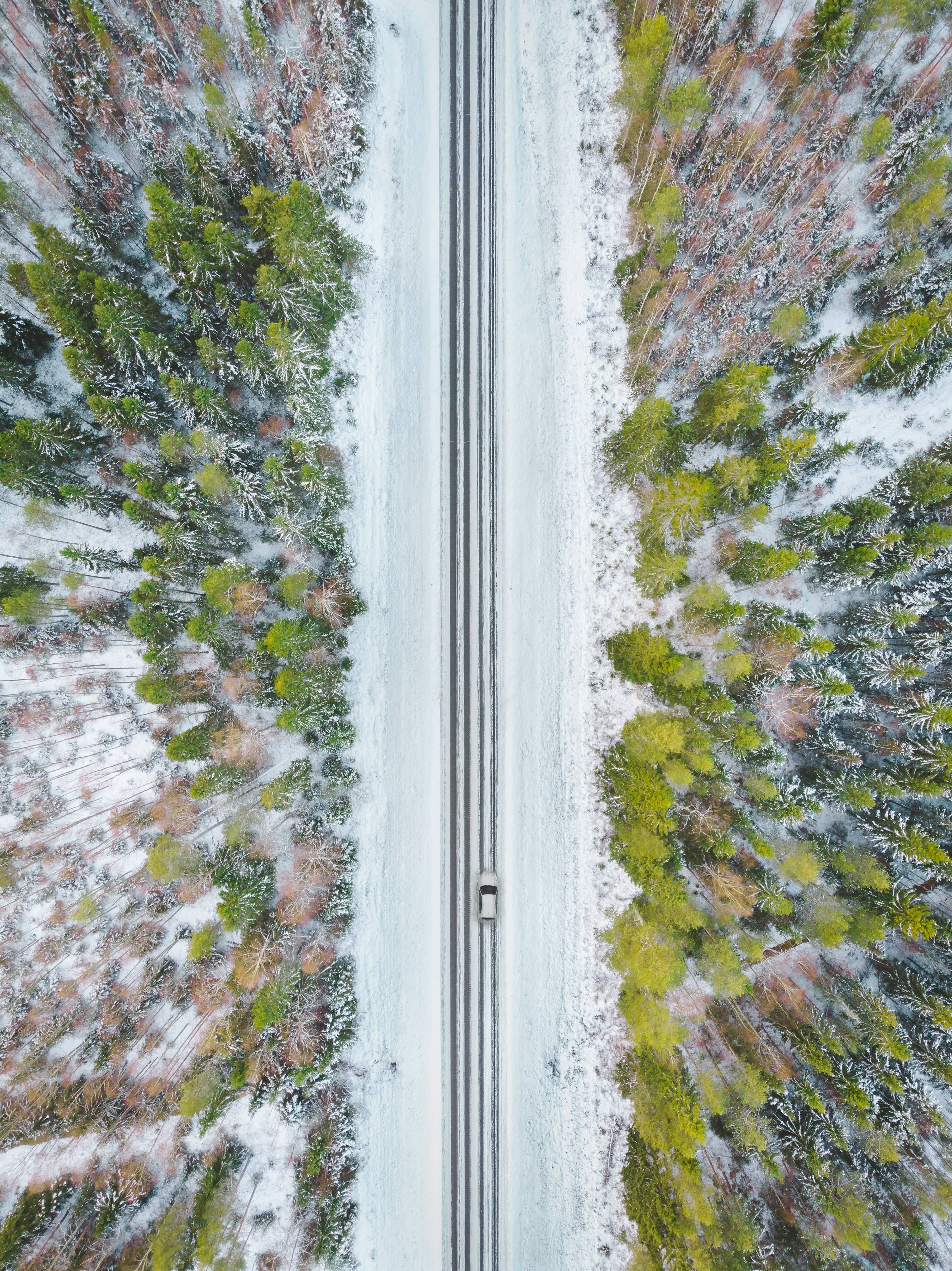 aerial photography of road between trees during daytime