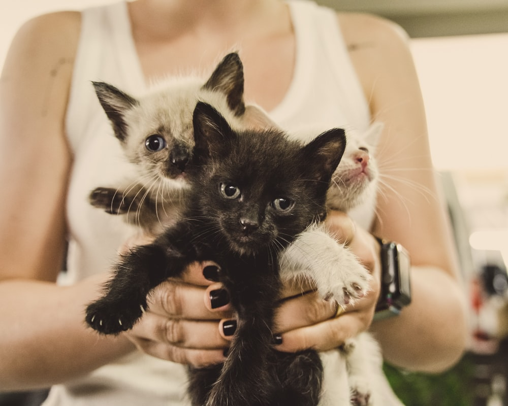 person holding 3 kittens