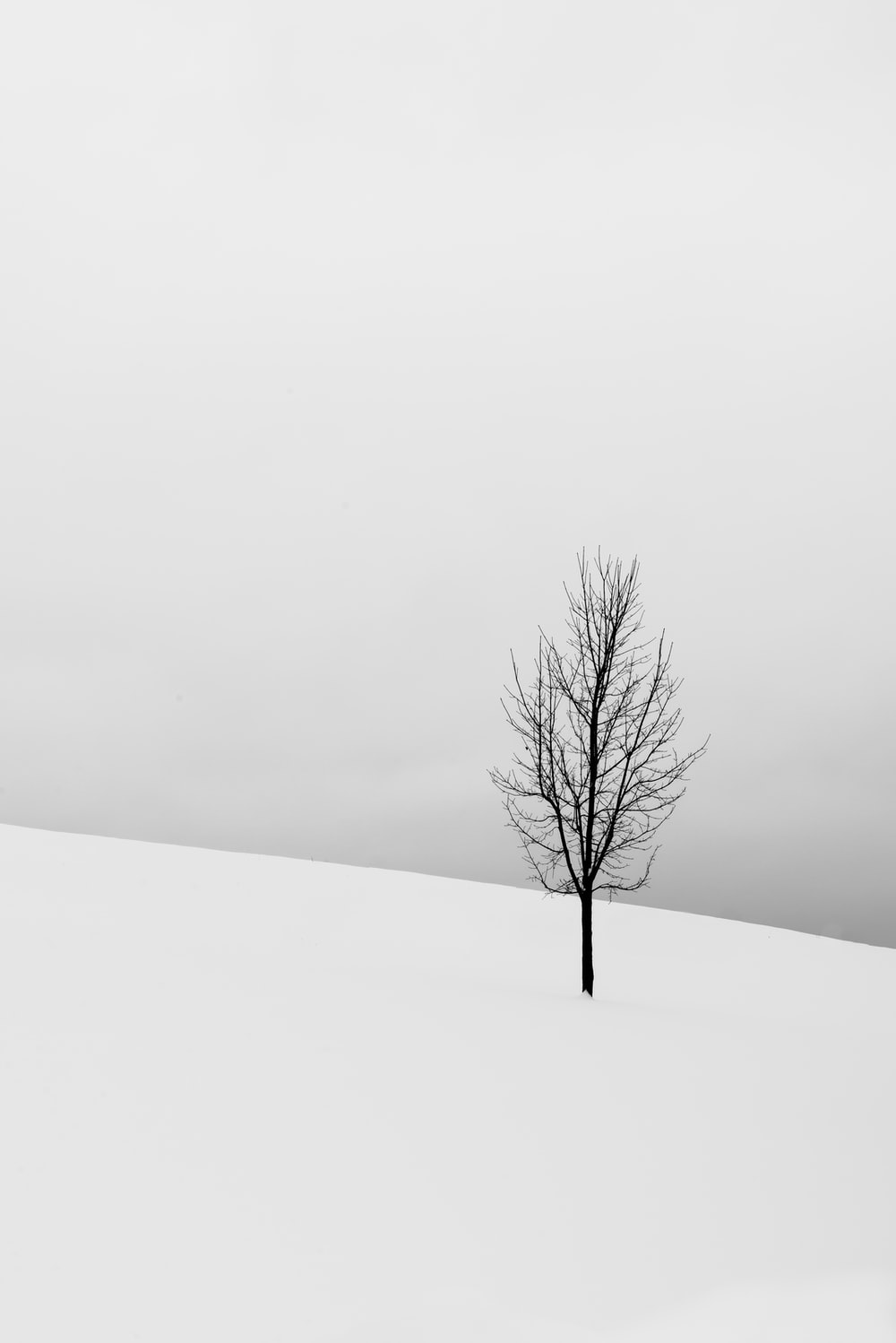bare tree in middle of snowy field