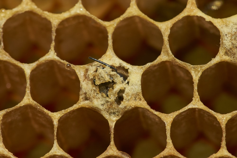 selective focus photography of honey comb