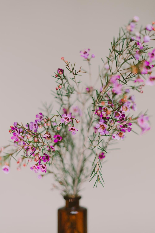 pink flower on vase