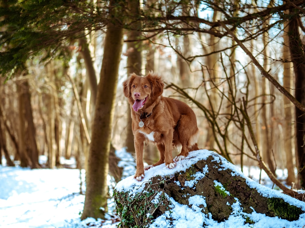 selective focus photography of brown dog standing on rock