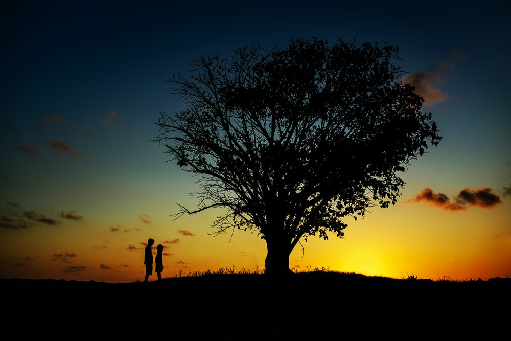 two people standing near tree