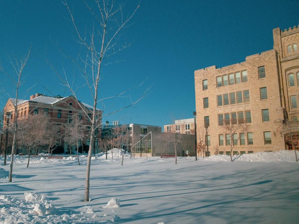 bare trees near concrete building
