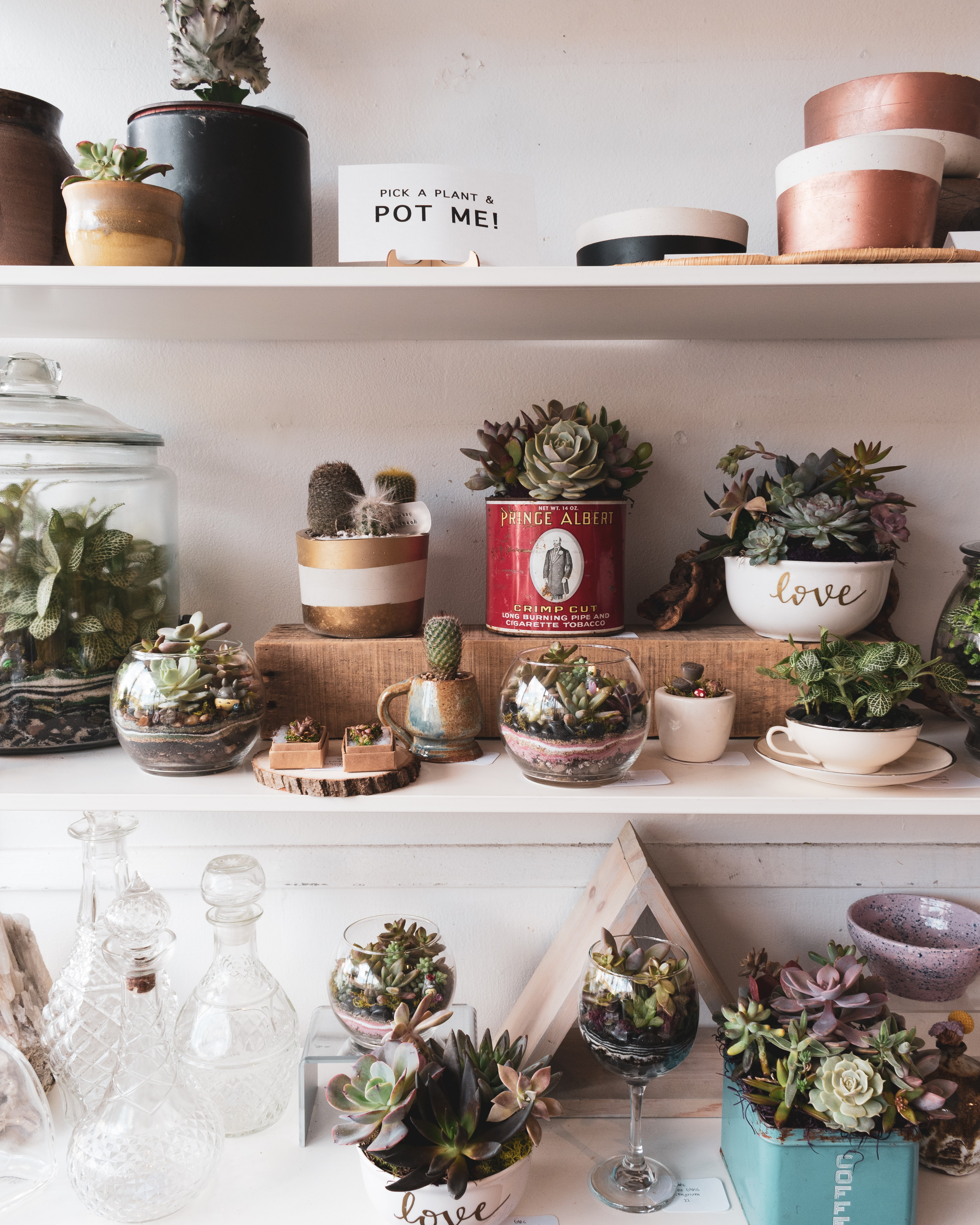 assorted succulent plants on white wooden shelf