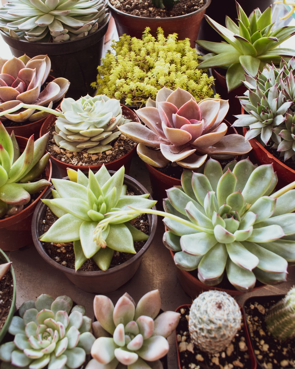 variety of succulent plants