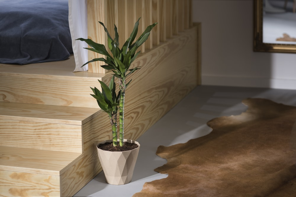 green lucky bamboo plant in brown flower pot beside wooden staircase