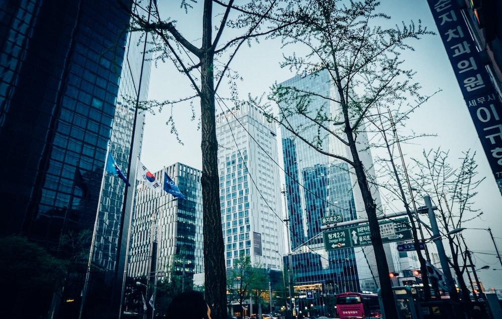 view of trees at the city at Seoul Korea