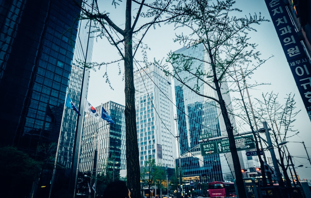 view of trees at the city at Seoul Korea