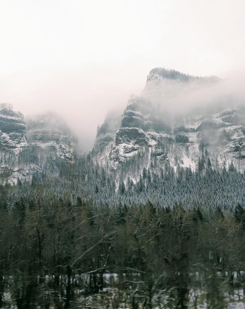 green trees near mountains
