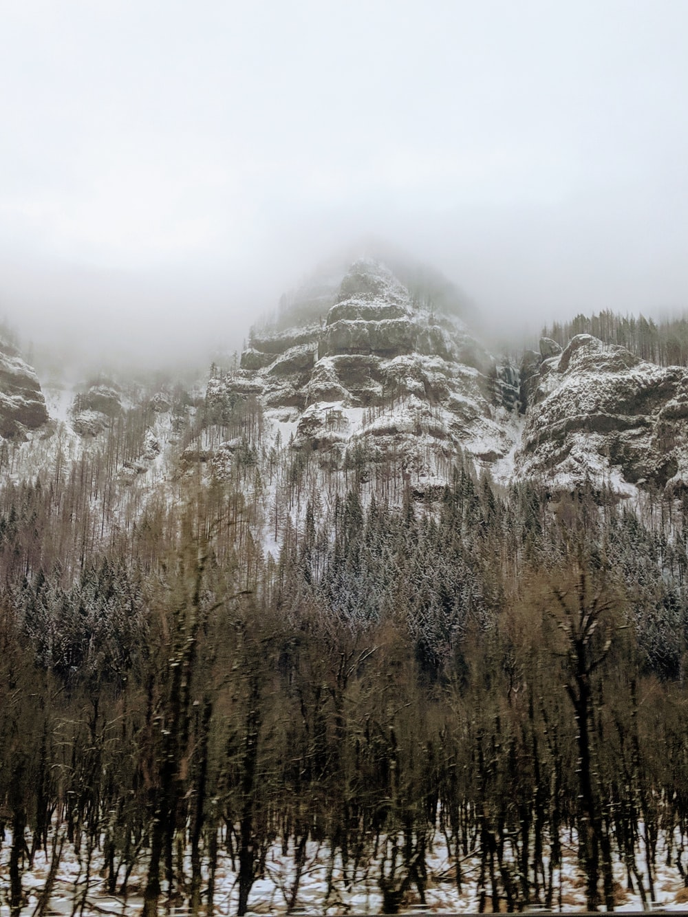 trees with snow-covered mountain during daytime