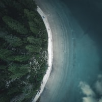 aerial photography of trees near sea during daytime