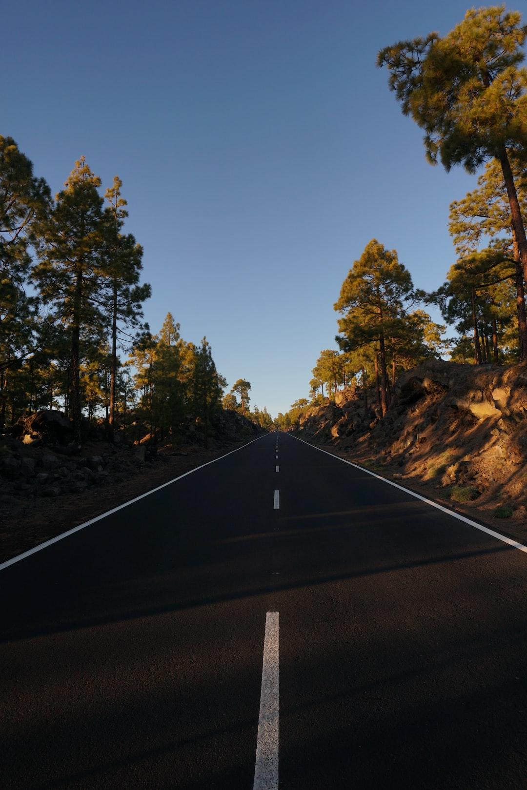 La vera casa dell'uomo non è una casa, è la strada. La vita stessa è un viaggio da fare a piedi. (Bruce Chatwin)