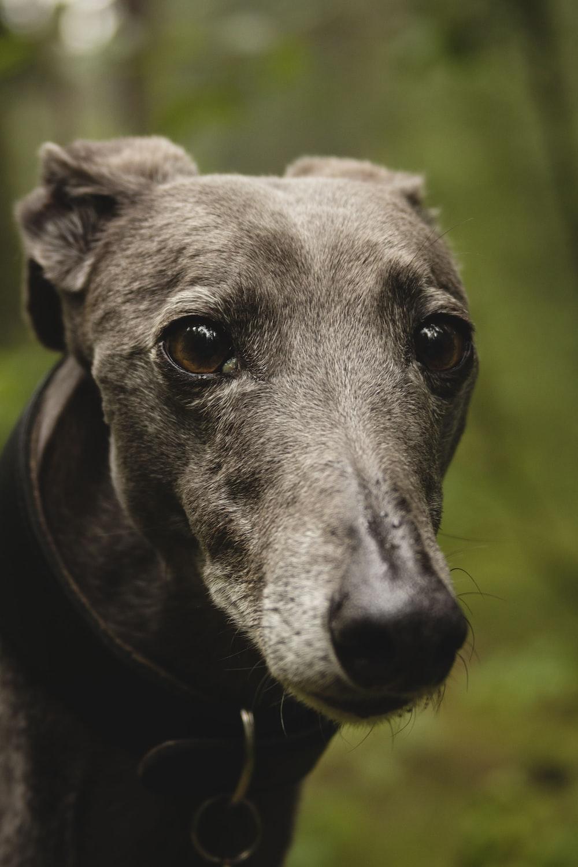 closeup photo of black dog