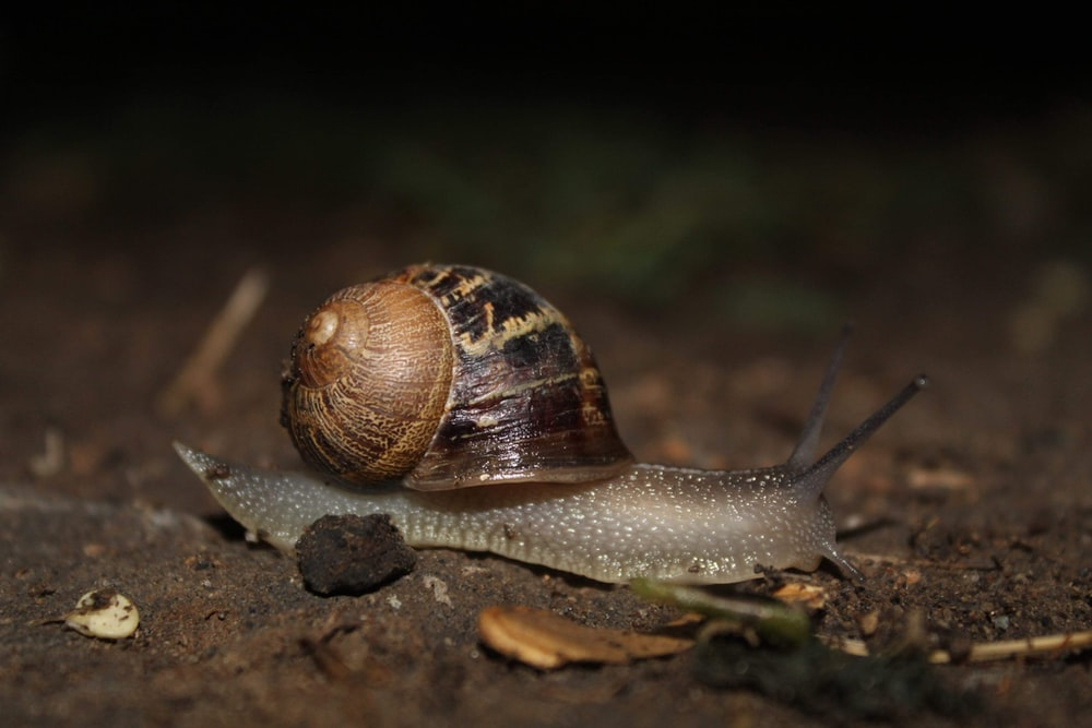 selective focus photography of snail on soil