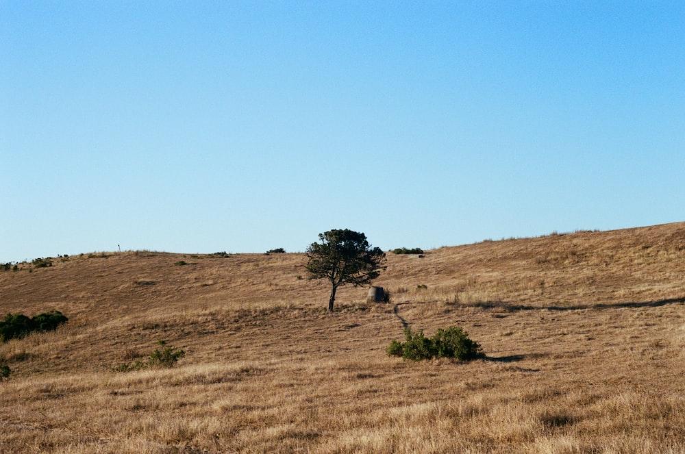 tree on brown ground