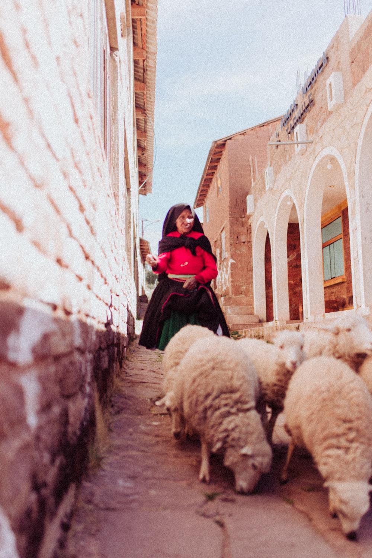 girl wearing red dress talking behind sheep during daytime