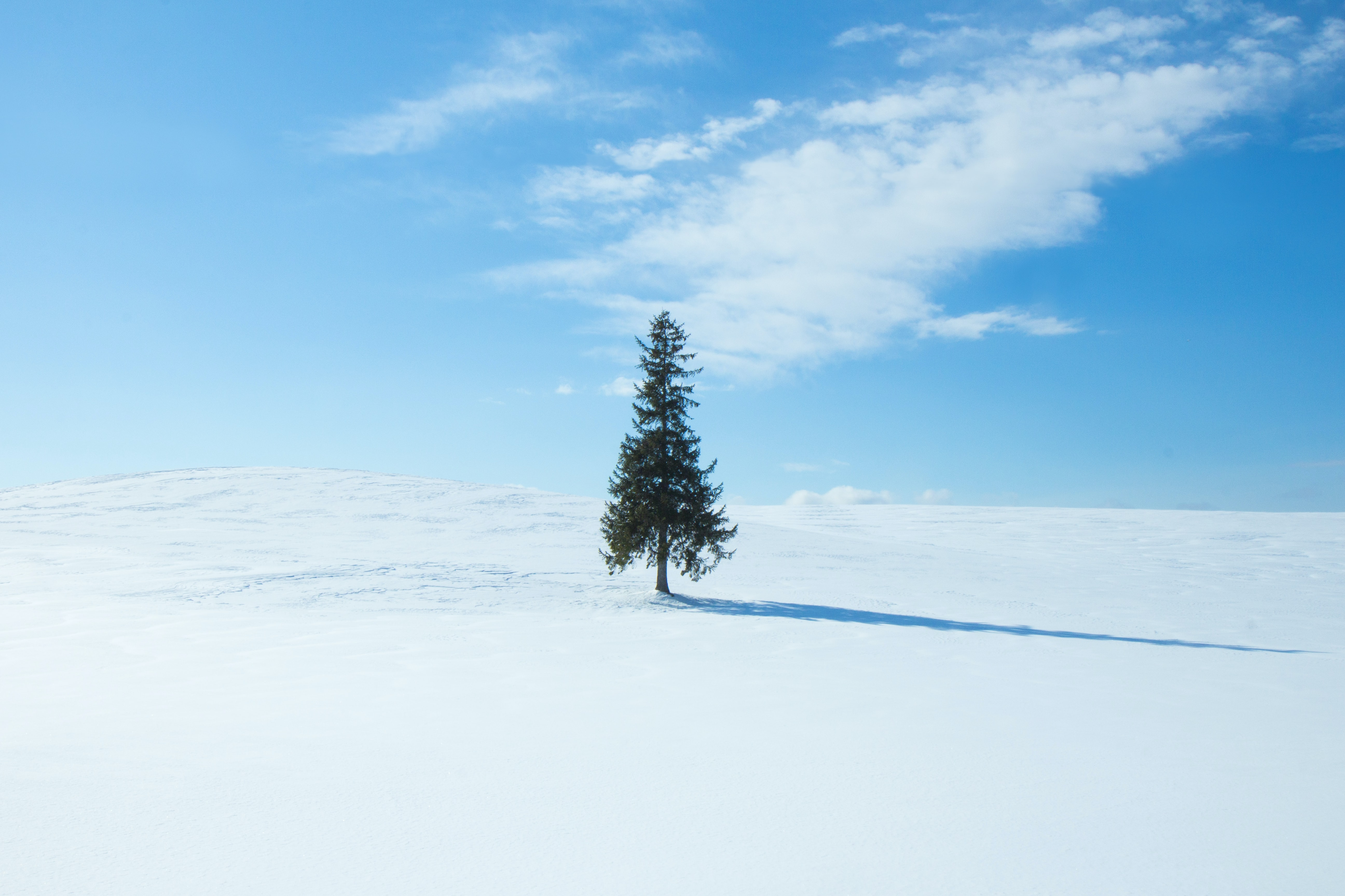 green pine tree at middle of field