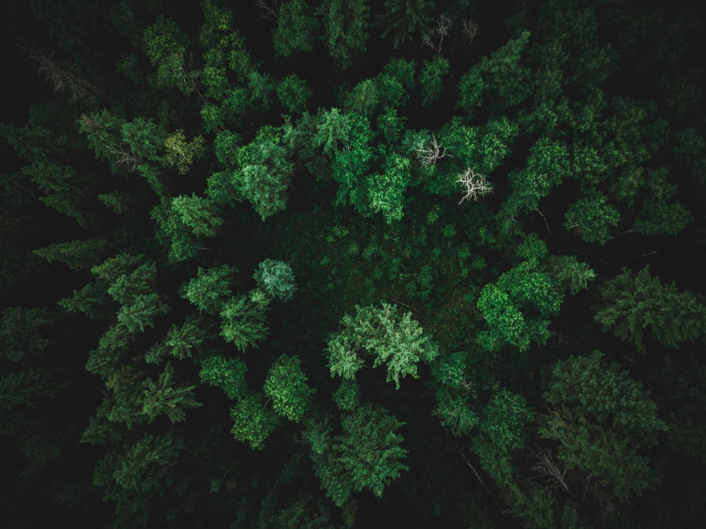top-view photography of tree