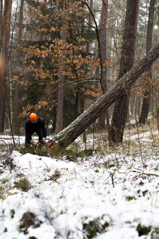 man cutting brown tree during daytime