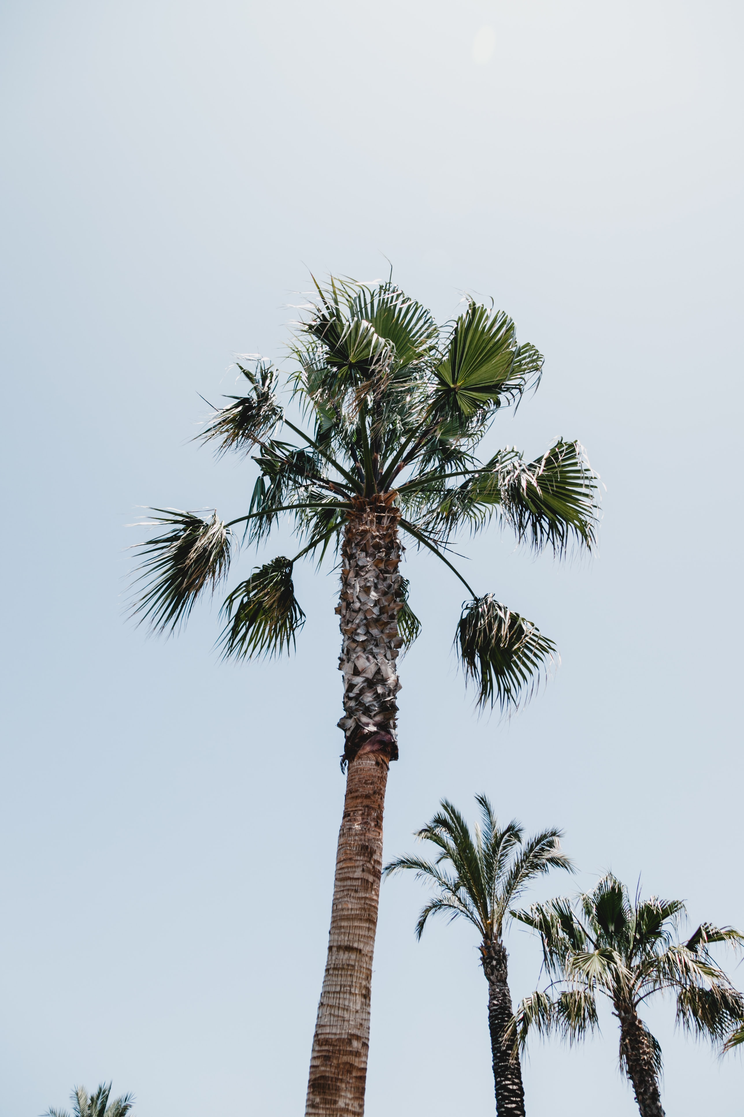low angle photography of palm tree