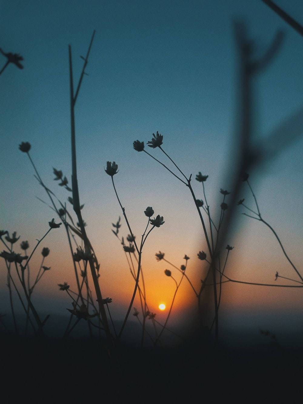 silhouette of flowers during nighttime