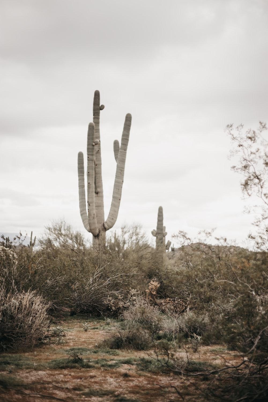 green cactus under white sky during daytime