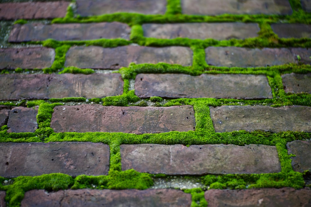 green moss growing in between brick spaces