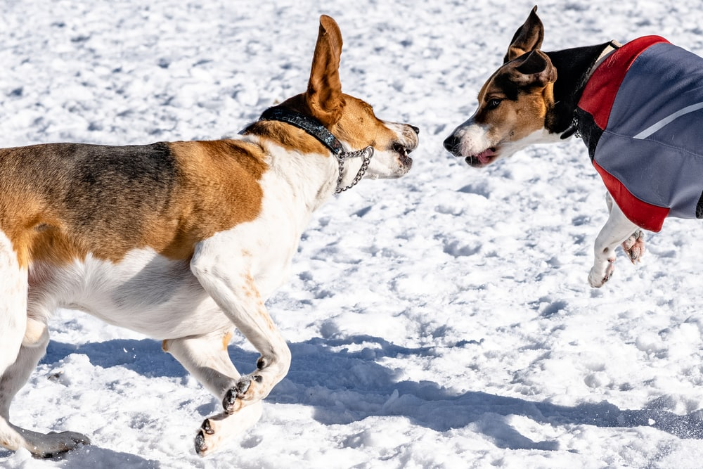 two brown and black dogs on white ground