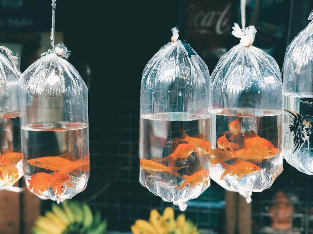 fish lot
