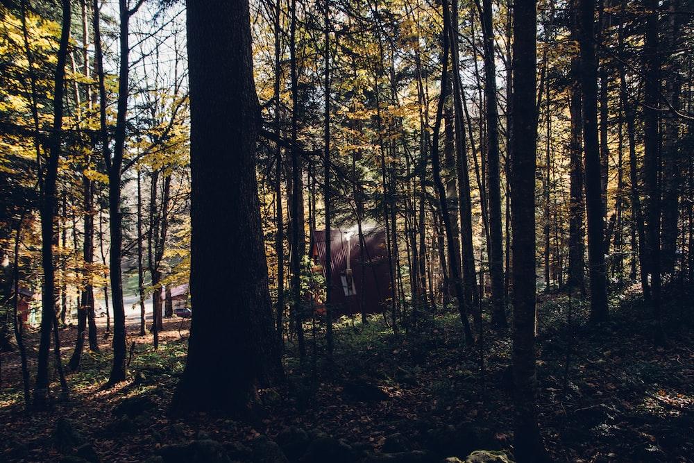 brown tree during daytime