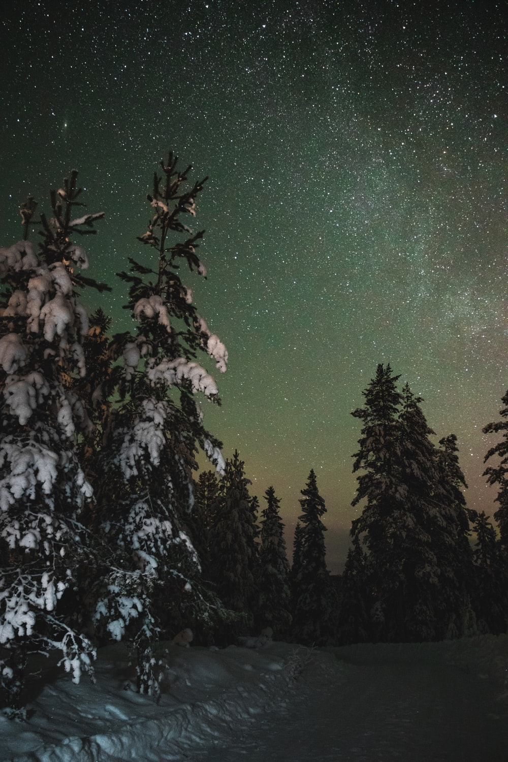 photography of milky way above forest