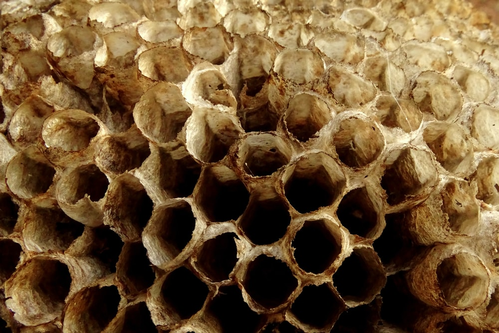 bee hive in close-up photography