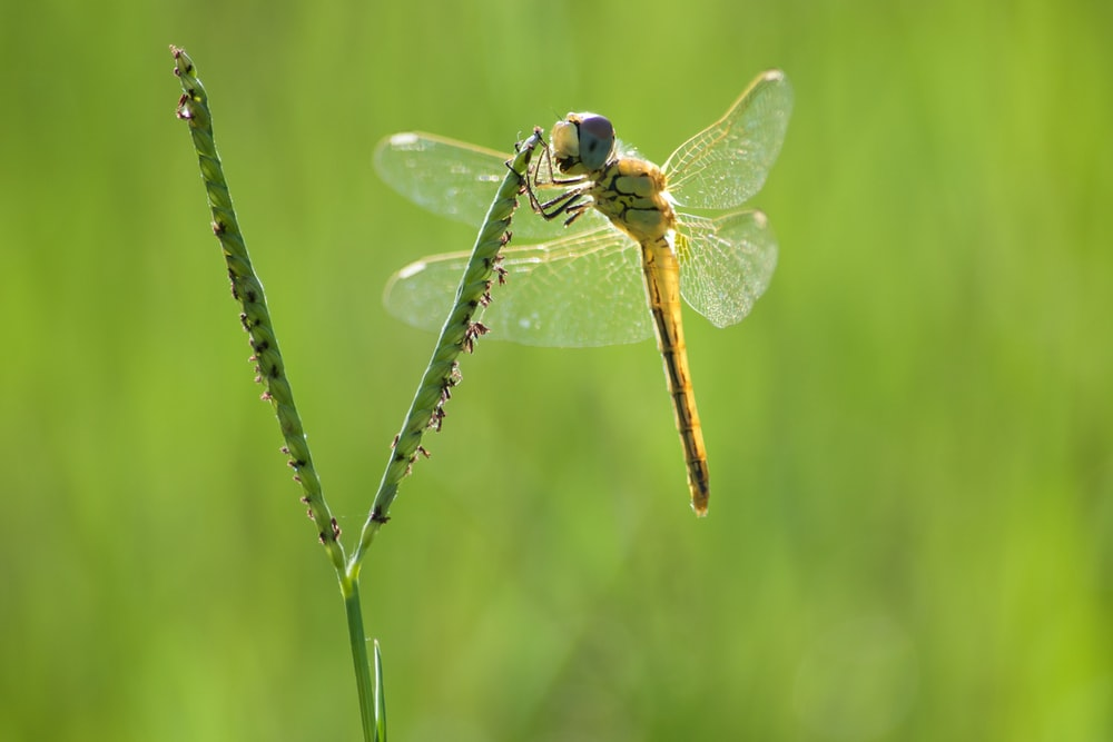 green dragonfly on leaf photograph