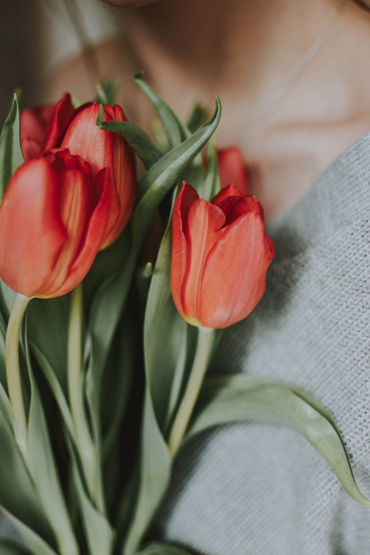 woman holding tulip flowers