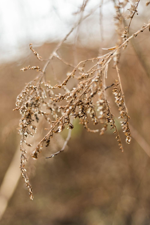brown leaf grass
