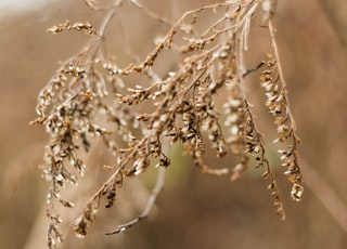 brown leaf grass