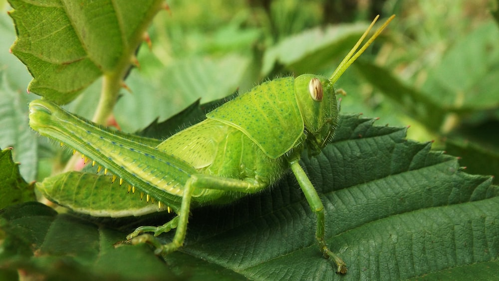 green insect on green leaf