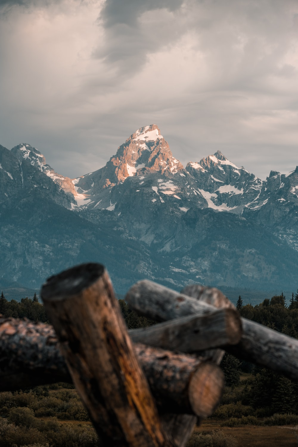 brown tree logs overlooking snow capped rocky mountain