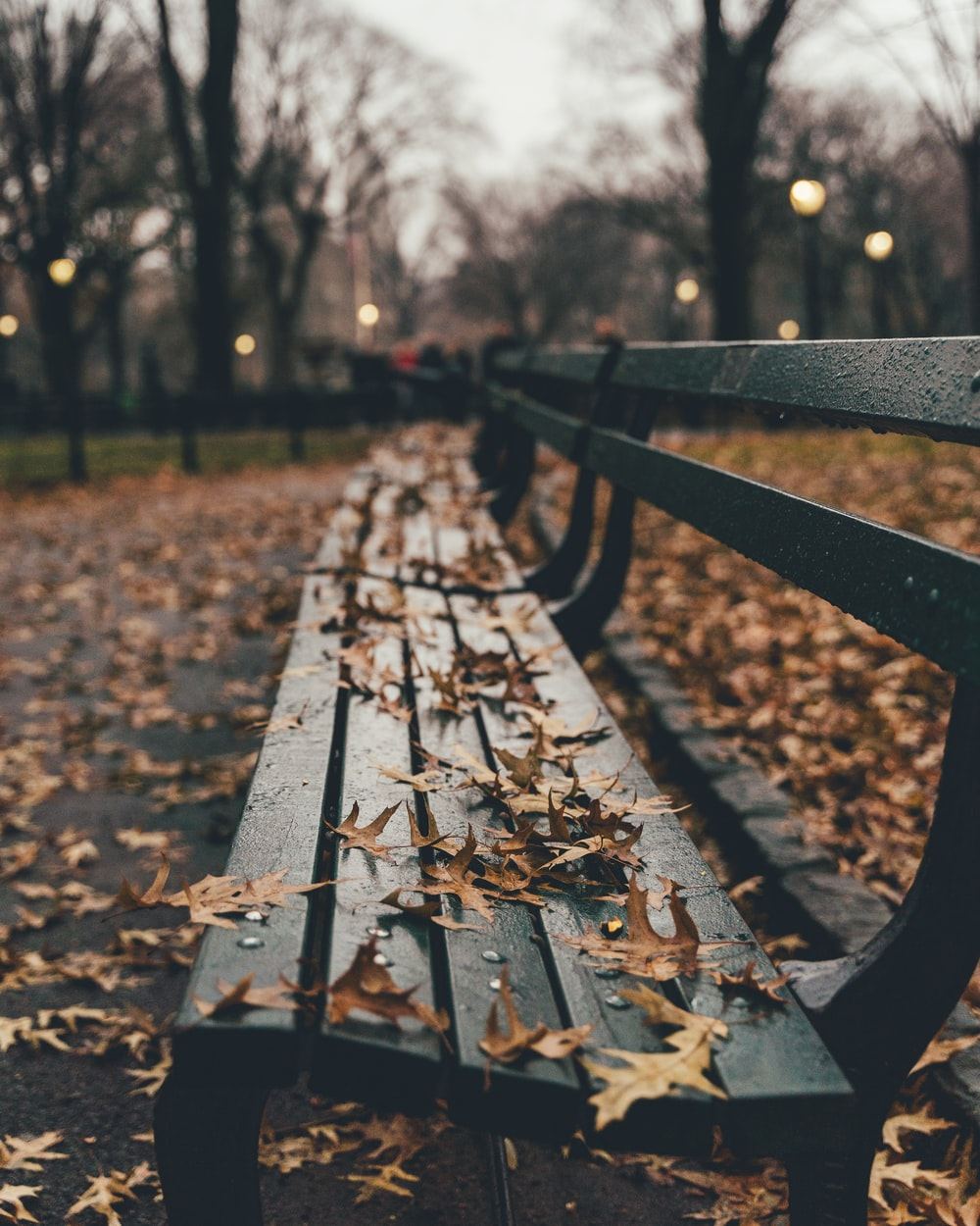 brown leaves on black wooden bench
