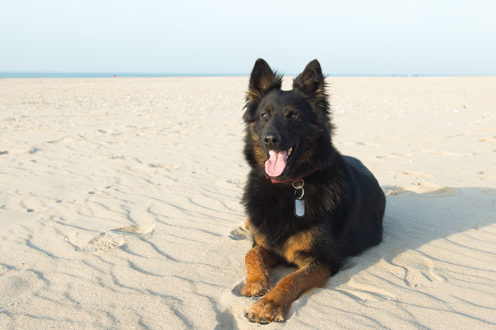 black and brown dog lying on white sand during daytime