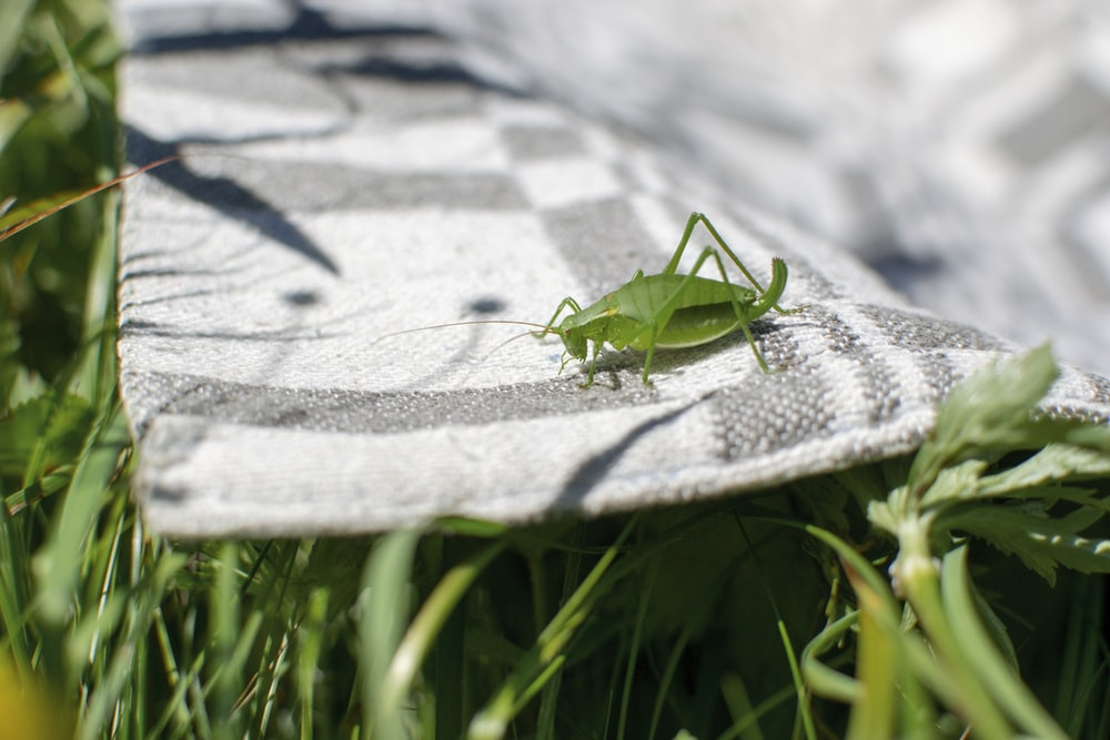 green cricket on rug