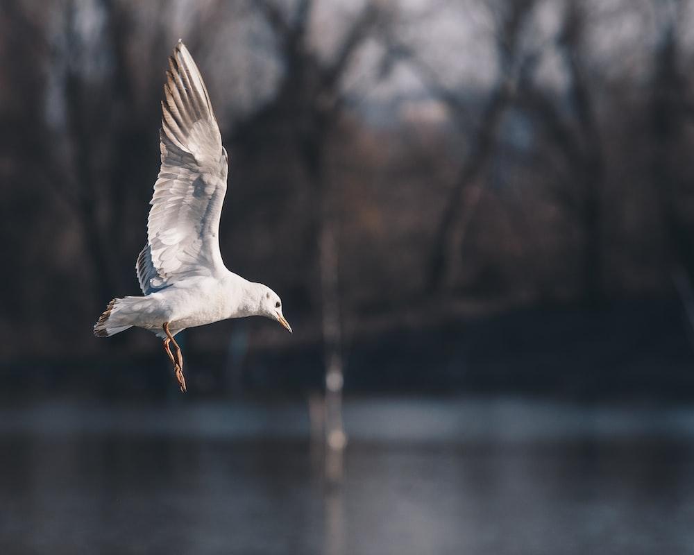 white seagull on flight