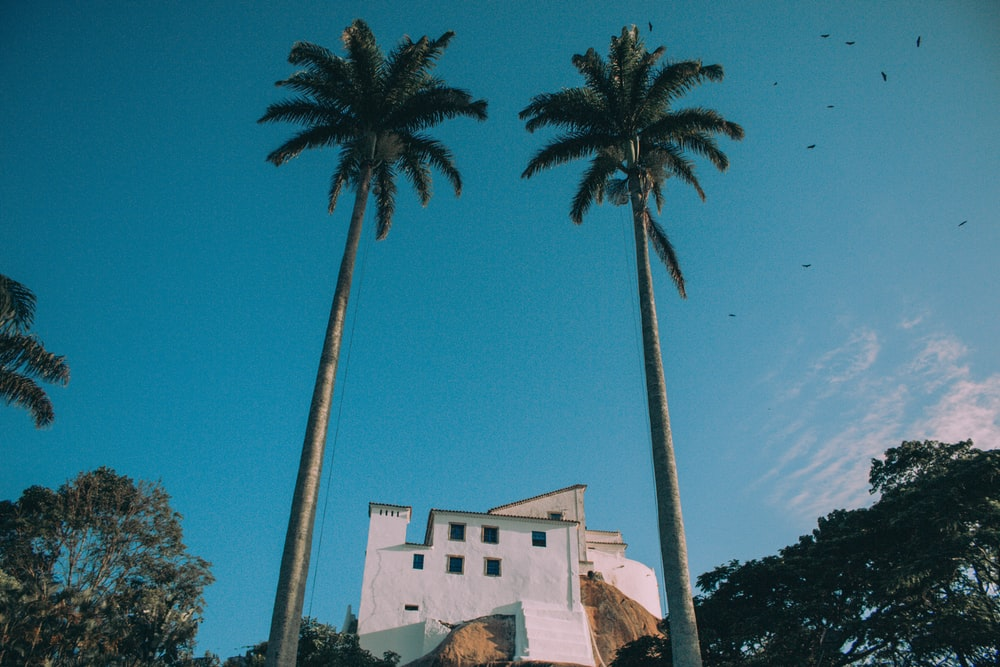 white house between 2 tall coconut trees