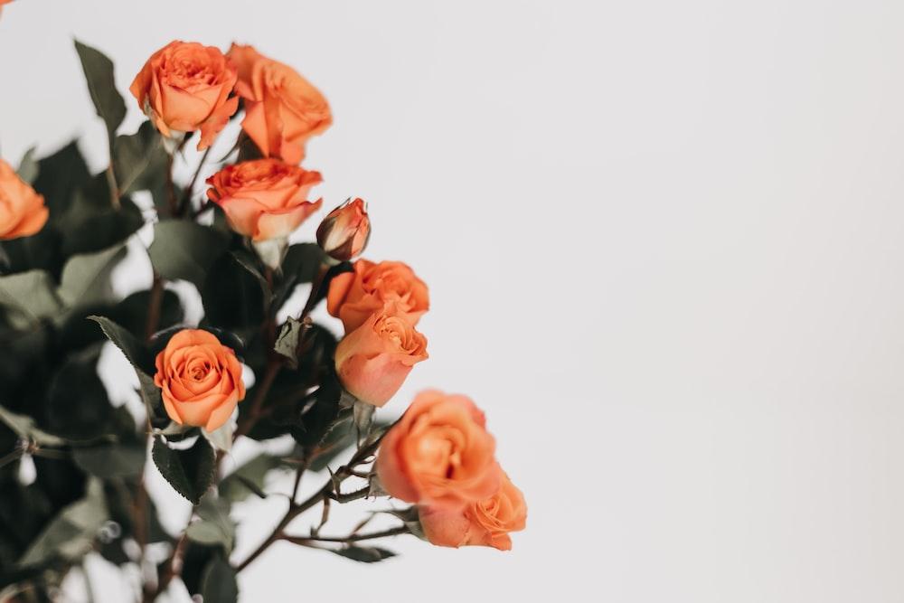 shallow focus photo of orange flowers