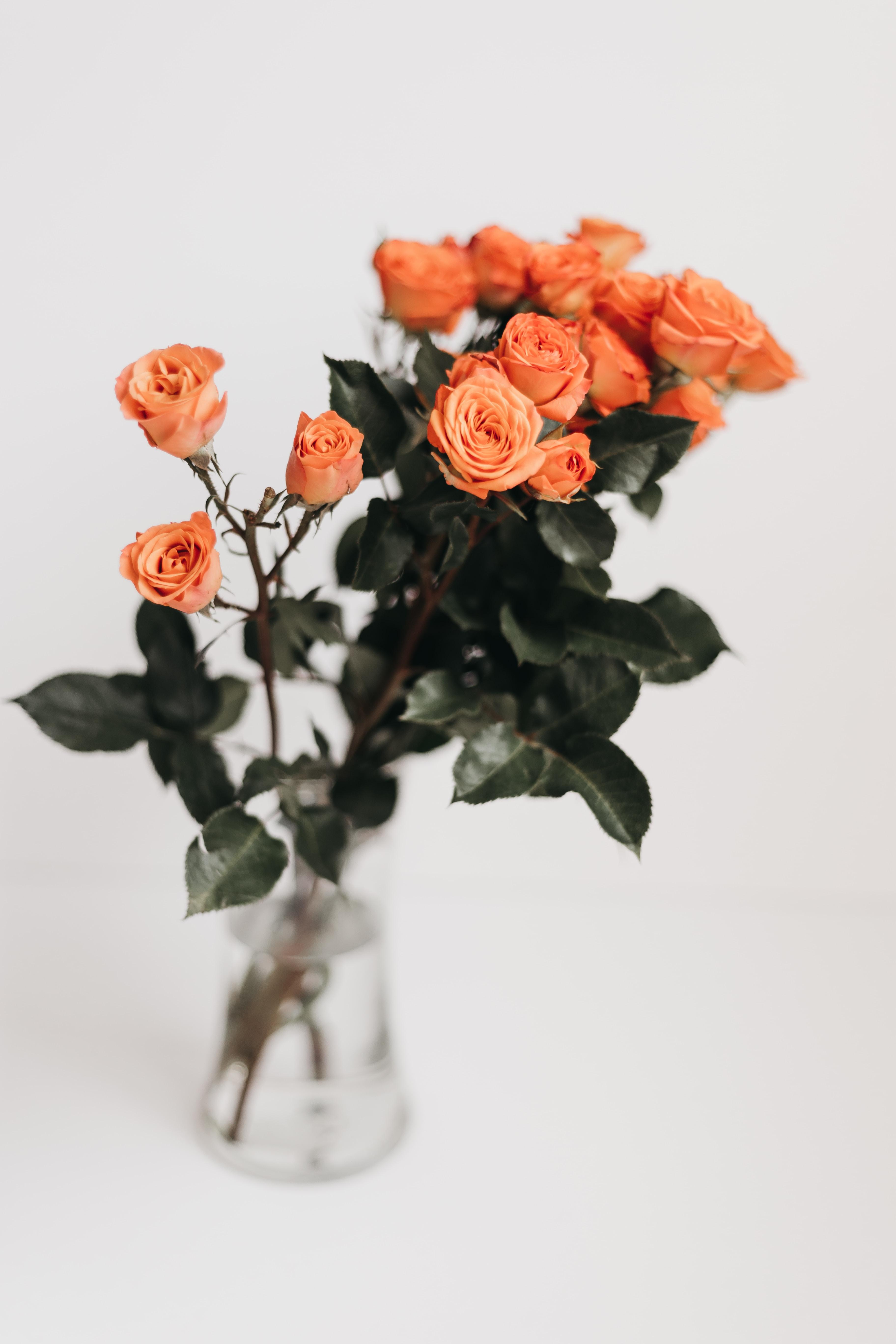 pink rose flower vase