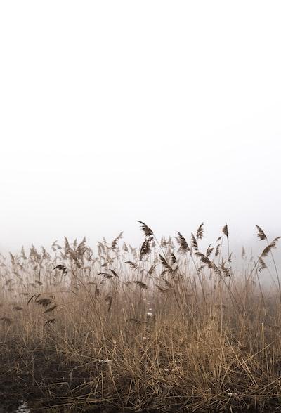 brown grass under white clouds