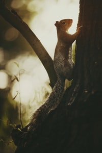 squirrel climbing on tree