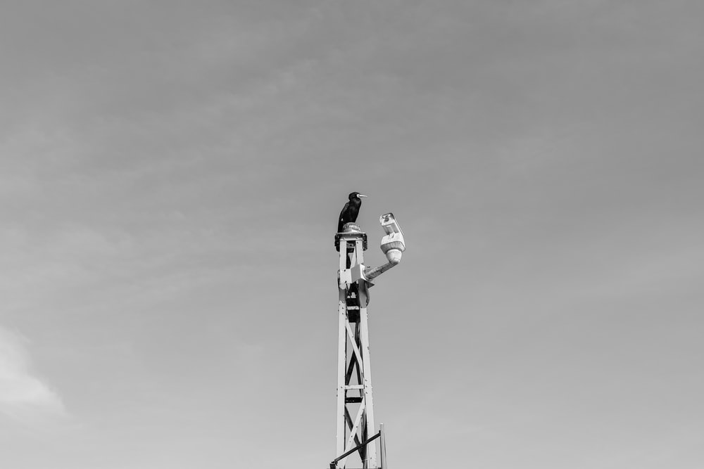 bird perched on tower in grayscale photo