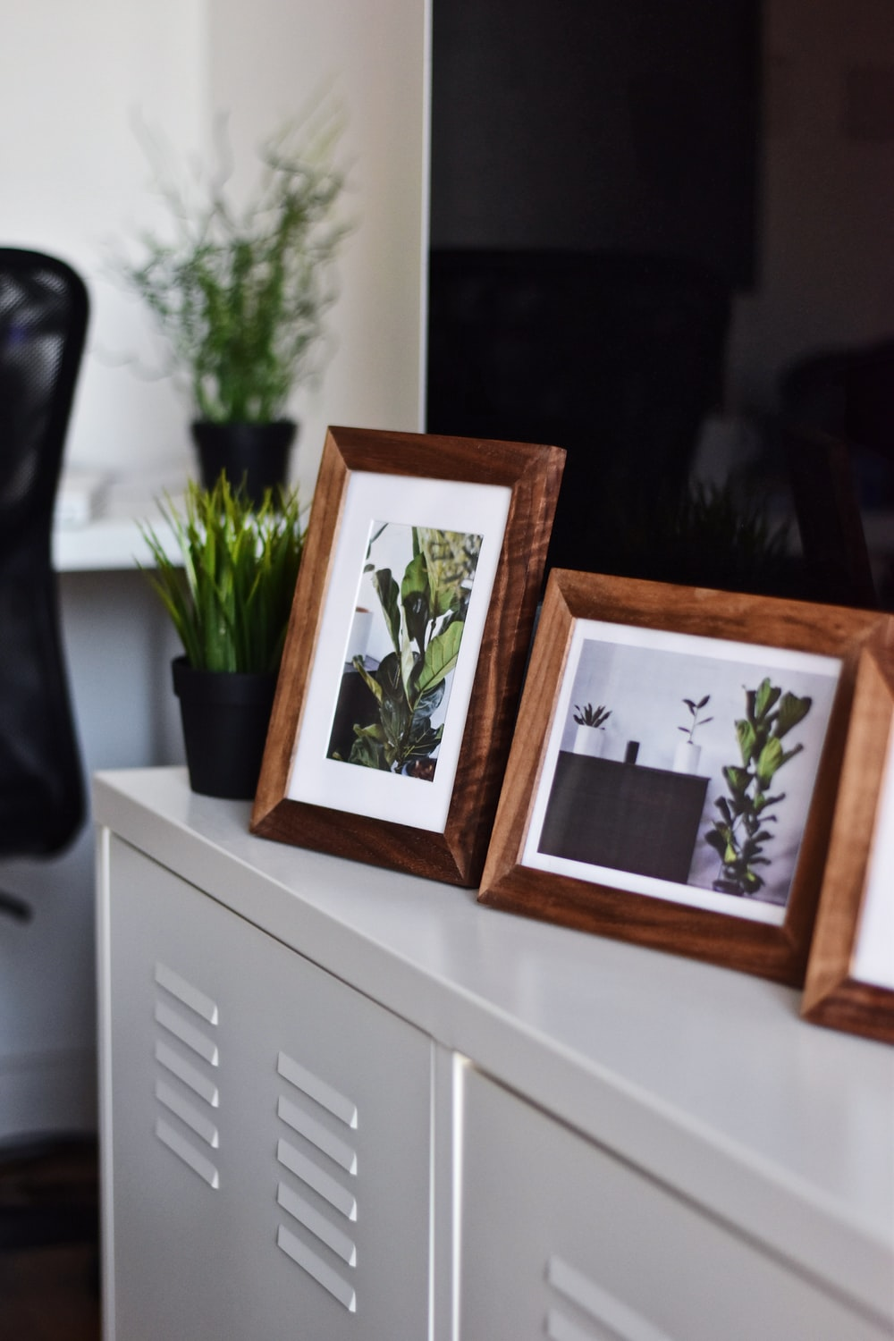 two green plant photos on white surface
